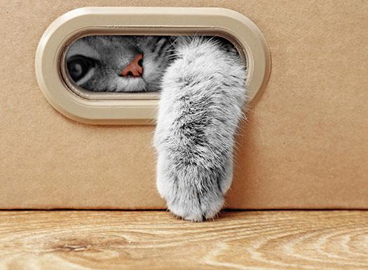 KittenPlayinginBox